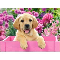 Castorland Puzzle Šteniatko Labradora v ružovom boxe, 300 dielov